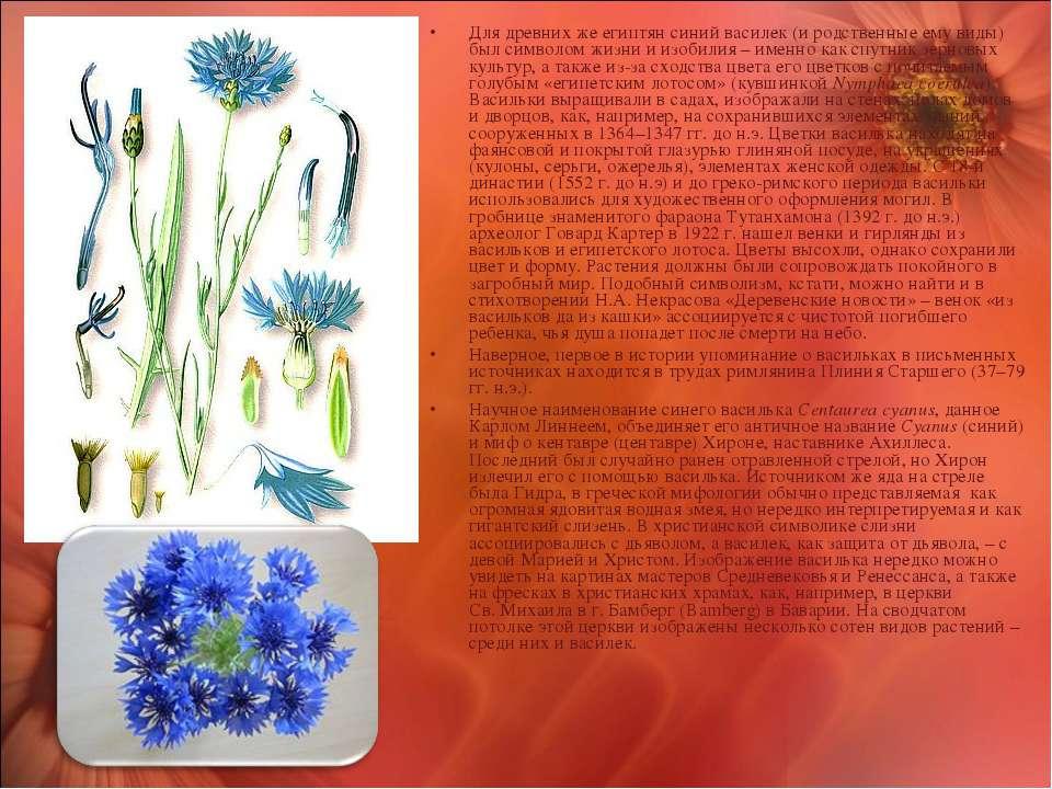 Для древних же египтян синий василек (и родственные ему виды) был символом жи...