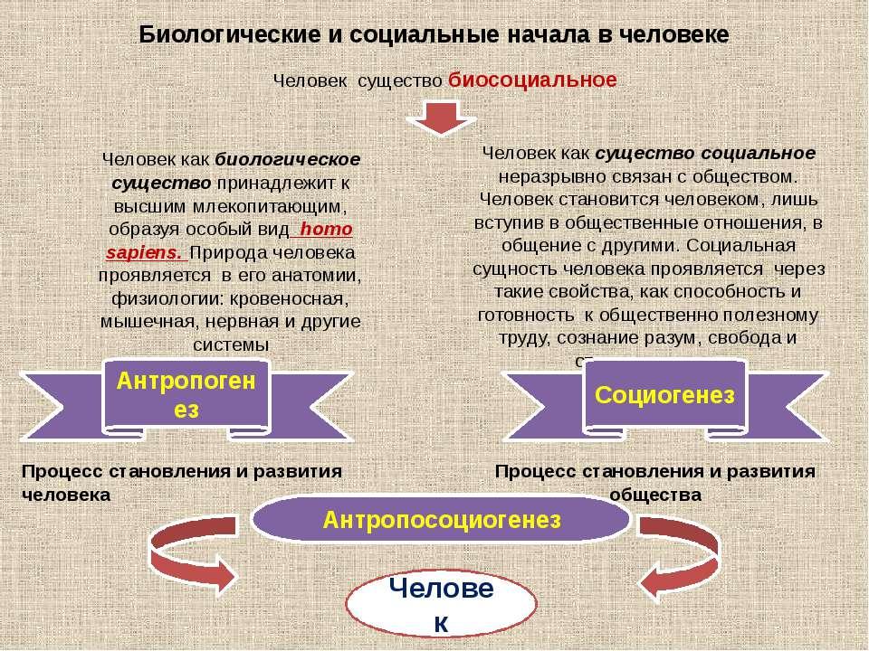 Биологические и социальные начала в человеке Человек существо биосоциальное Ч...