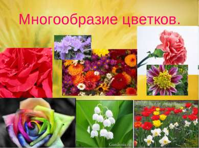 Многообразие цветков.