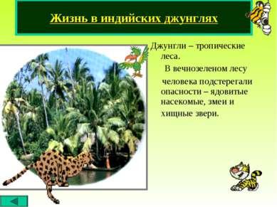 Джунгли – тропические леса. В вечнозеленом лесу человека подстерегали опаснос...