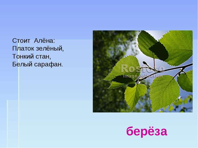 берёза Стоит Алёна: Платок зелёный, Тонкий стан, Белый сарафан.