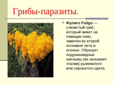 Грибы-паразиты. Фулиго Fuligo — слизистый гриб, который живет на гниющих пнях...