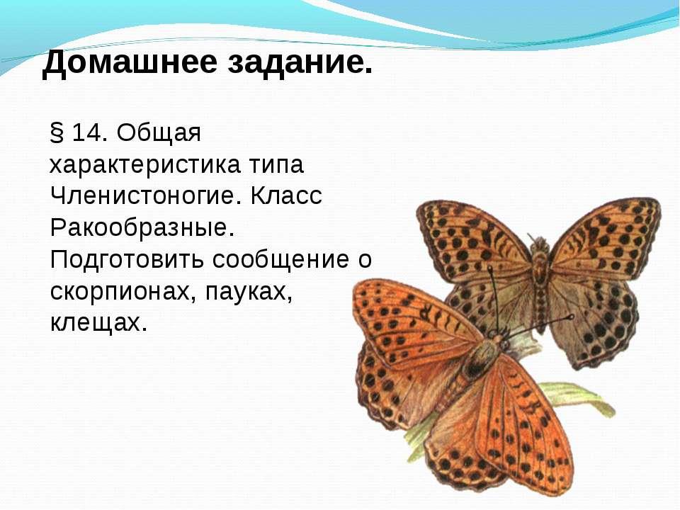 Домашнее задание. § 14. Общая характеристика типа Членистоногие. Класс Ракооб...