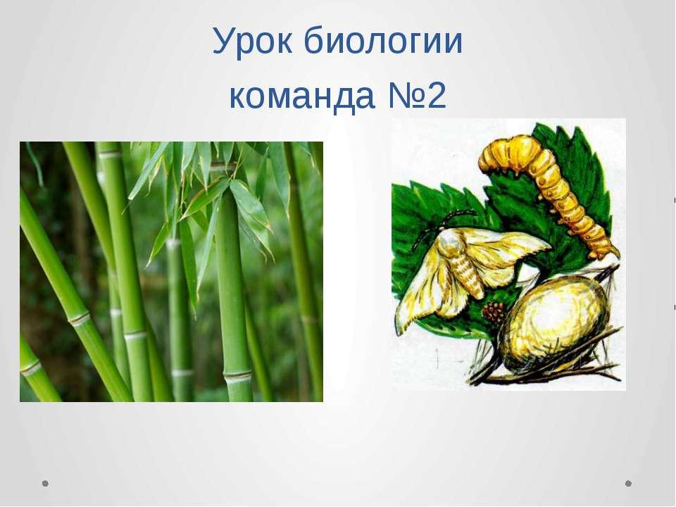 Урок биологии команда №2