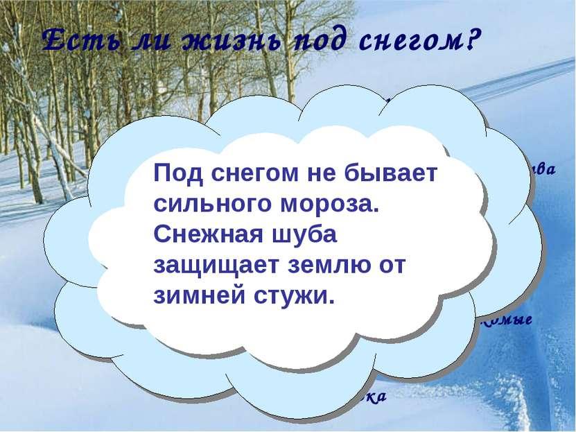 Есть ли жизнь под снегом? Что мы наблюдали под снегом на экскурсии? опавшая л...