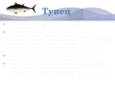 Тунец В океане много чудес, и одно из них – теплокровные рыбы тунцы. У больши...