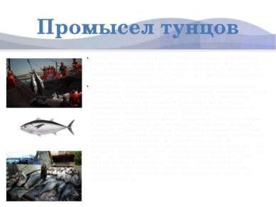Промысел тунцов Тунцы очень плодовиты. Крупные рыбы способны произвести на св...