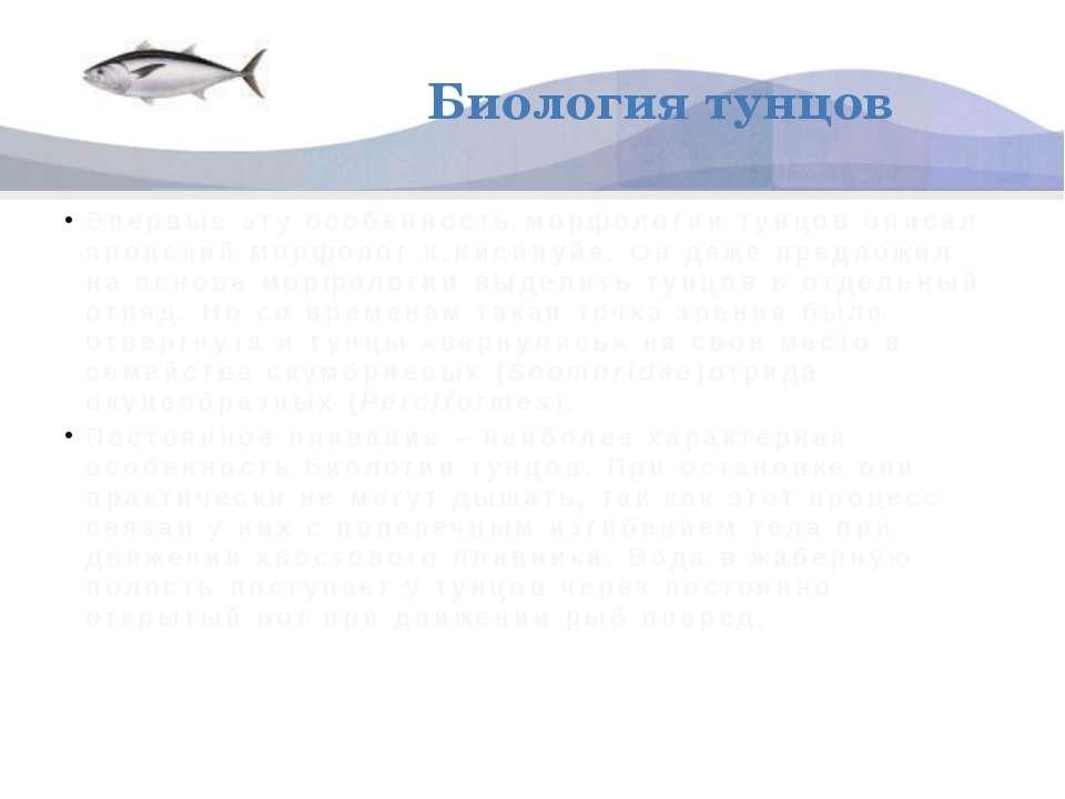 Биология тунцов Впервые эту особенность морфологии тунцов описал японский мор...