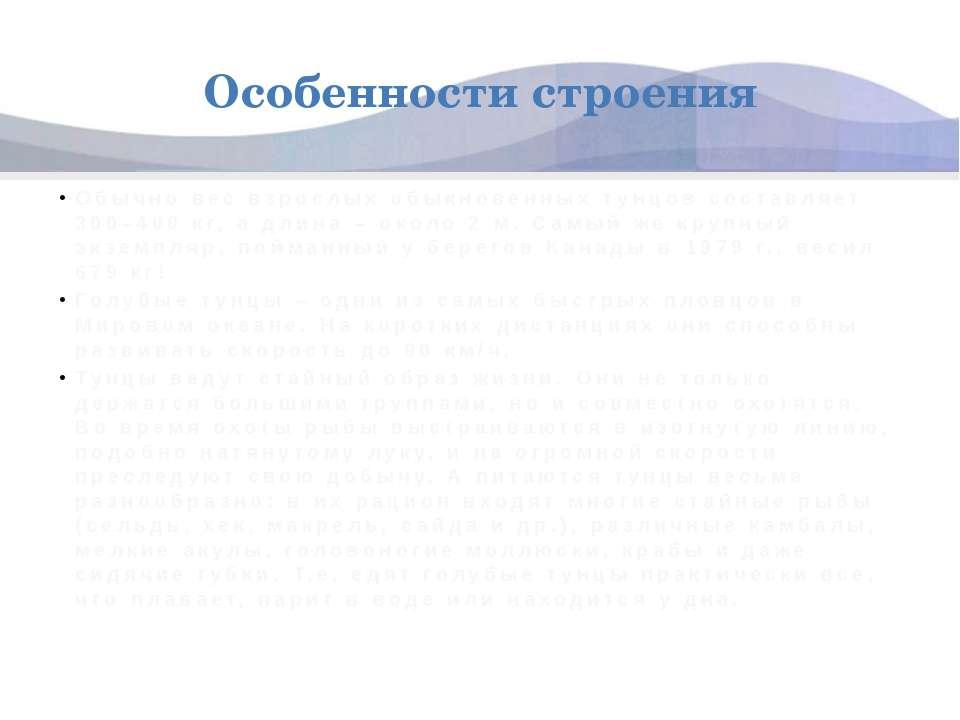 Особенности строения Обычно вес взрослых обыкновенных тунцов составляет 300–4...