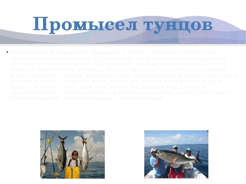 Промысел тунцов Всемирный фонд дикой природы в 2006 г. призвал полностью прек...