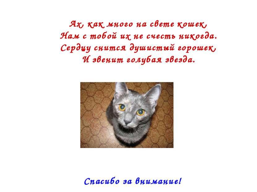 Ах, как много на свете кошек, Нам с тобой их не счесть никогда. Сердцу снится...