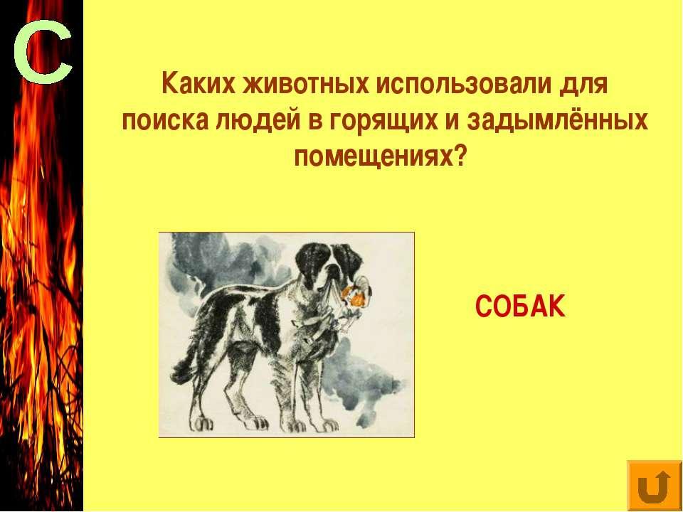 Каких животных использовали для поиска людей в горящих и задымлённых помещени...
