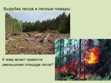 Вырубка лесов и лесные пожары К чему может привести уменьшение площади лесов?
