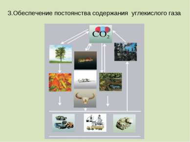3.Обеспечение постоянства содержания углекислого газа