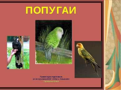 ПОПУГАИ Презентацию подготовила уч-ся 2 Д класса МОУ «СОШ с. Сасыколи» Торопш...