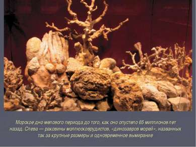 Морское дно мелового периода до того, как оно опустело 65 миллионов лет наза...