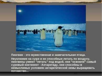 Пингвин - это мужественная и замечательная птица. Неуклюжие на суше и не спос...