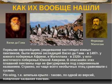 КАК ИХ ВООБЩЕ НАШЛИ Первыми европейцами, увидевшими настоящих южных пингвинов...