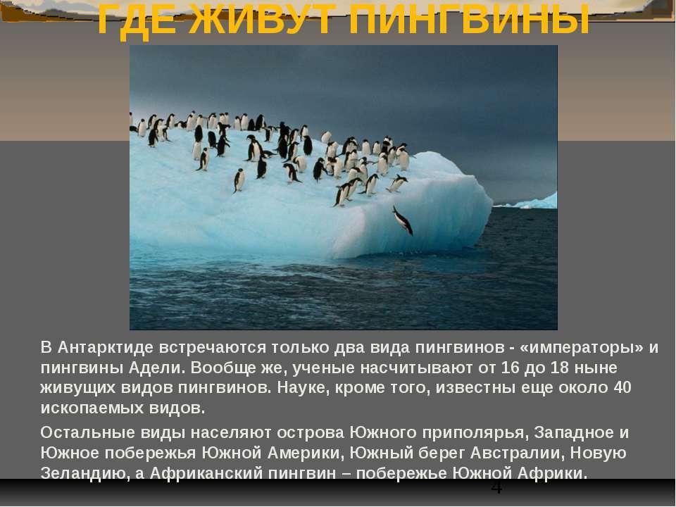 ГДЕ ЖИВУТ ПИНГВИНЫ В Антарктиде встречаются только два вида пингвинов - «импе...