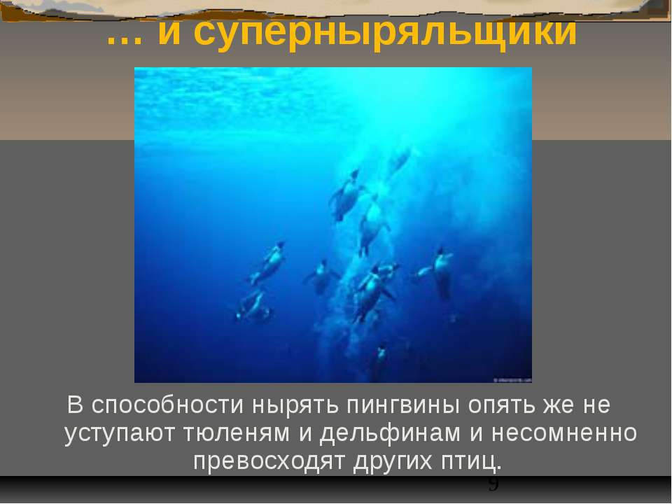 … и суперныряльщики В способности нырять пингвины опять же не уступают тюленя...