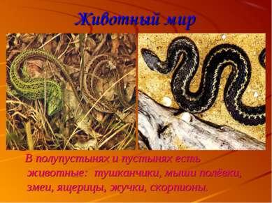 Животный мир В полупустынях и пустынях есть животные: тушканчики, мыши полёвк...