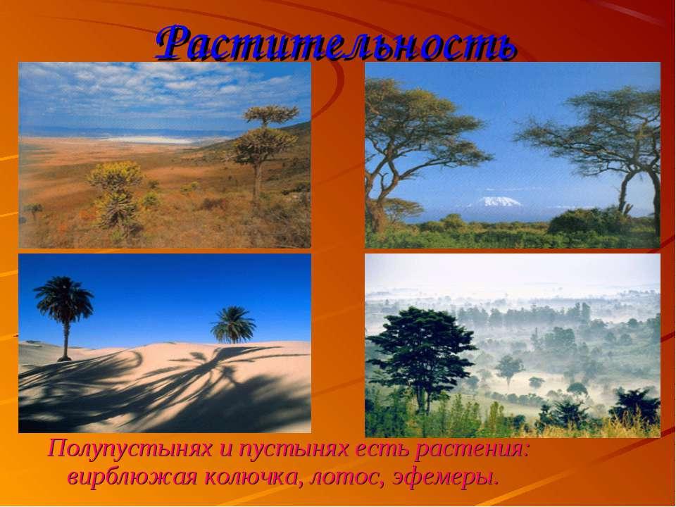 Растительность Полупустынях и пустынях есть растения: вирблюжая колючка, лото...