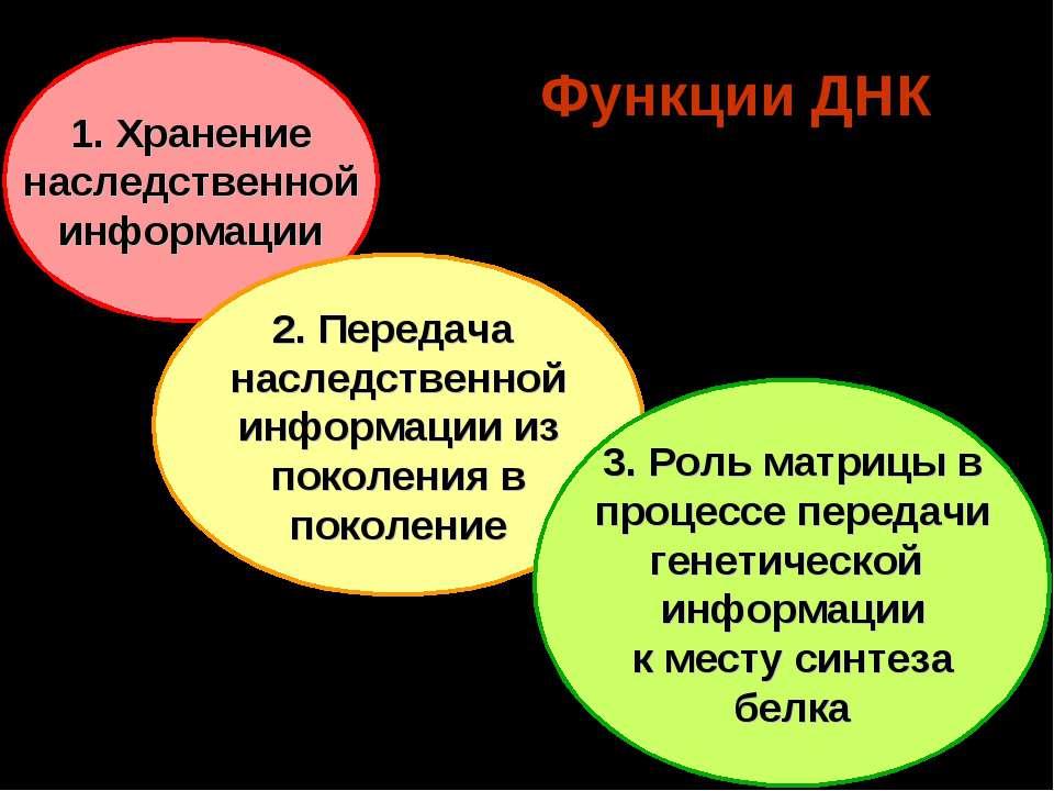 Функции ДНК 1. Хранение наследственной информации 2. Передача наследственной ...