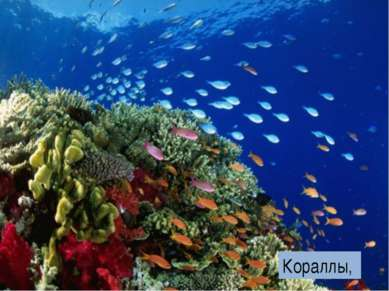 Кораллы,
