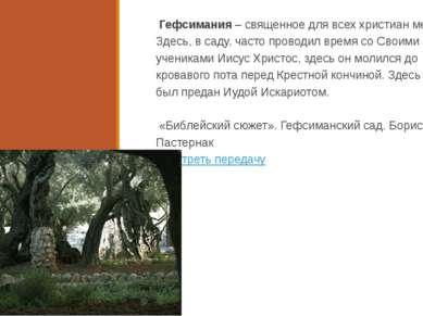 Гефсимания – священное для всех христиан место. Здесь, в саду, часто проводил...