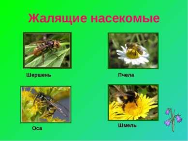 Жалящие насекомые Шершень Пчела Оса Шмель