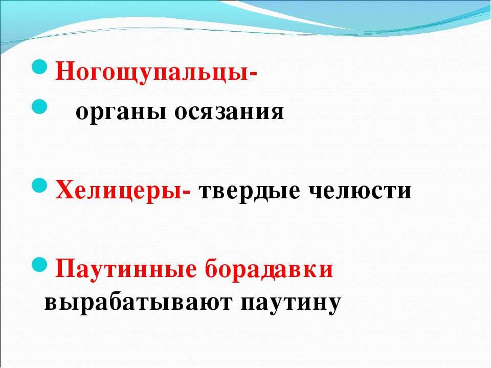 Ногощупальцы- органы осязания Хелицеры- твердые челюсти Паутинные борадавки в...