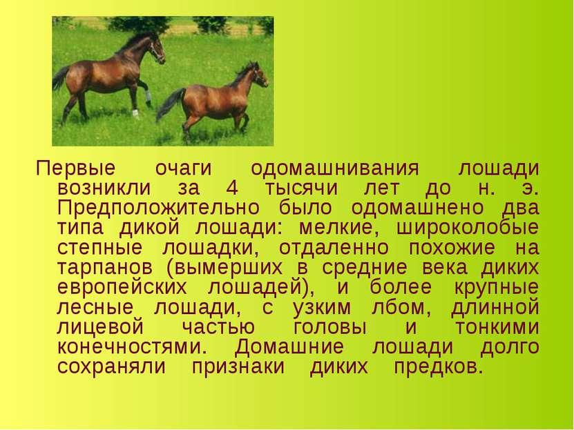 Первые очаги одомашнивания лошади возникли за 4 тысячи лет до н. э. Предполож...