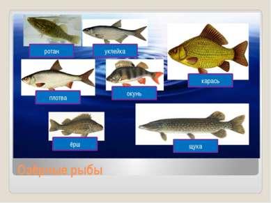Озёрные рыбы карась щука ёрш окунь плотва ротан уклейка