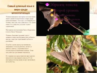 Самый длинный язык в мире среди млекопитающих Ученые выяснили: нектарная лету...