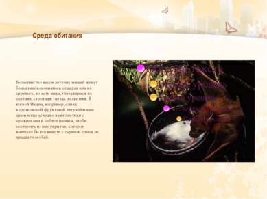 Среда обитания Большинство видов летучих мышей живут большими колониями в пещ...