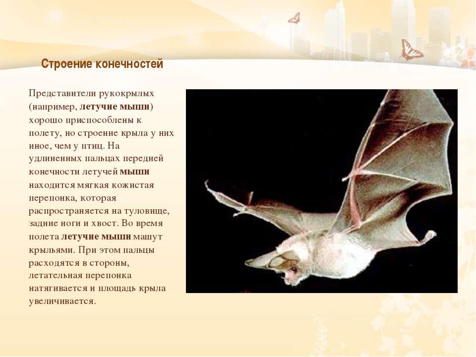 Строение конечностей Представители рукокрылых (например, летучие мыши) хорошо...