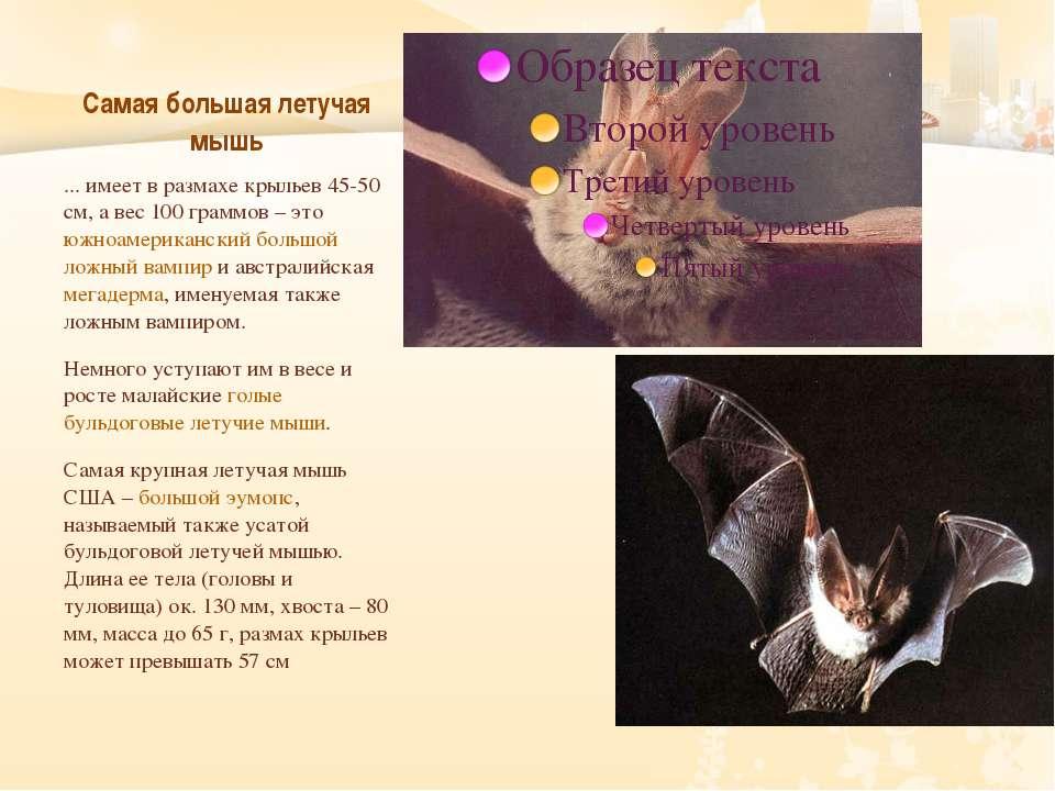 Самая большая летучая мышь ... имеет в размахе крыльев 45-50 см, а вес 100 гр...