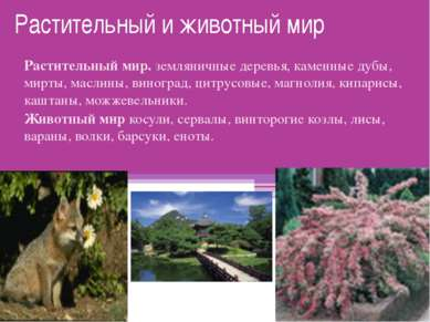Растительный и животный мир Растительный мир. земляничные деревья, каменные д...