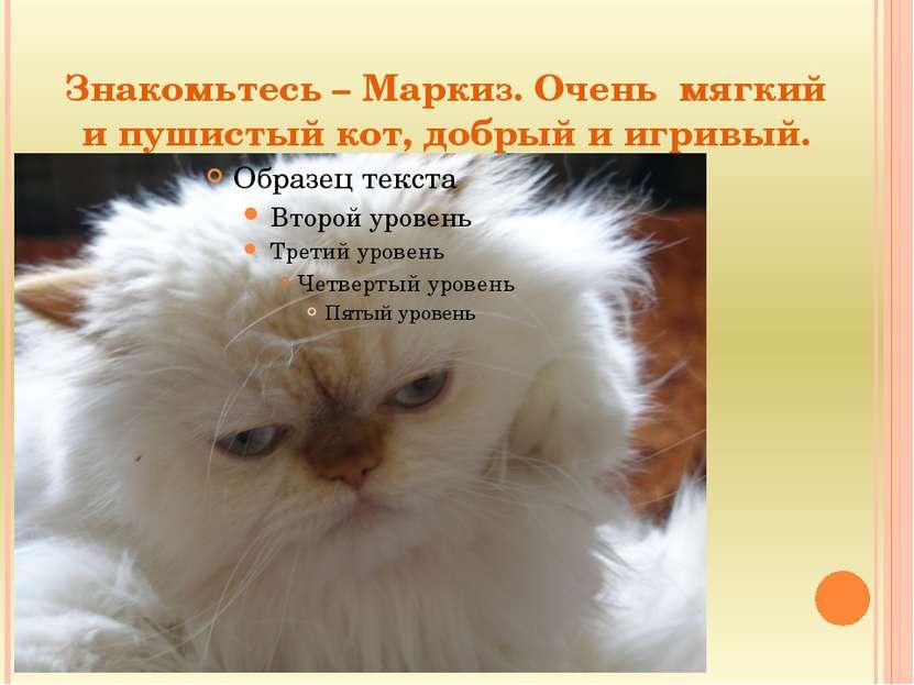 Знакомьтесь – Маркиз. Очень мягкий и пушистый кот, добрый и игривый.