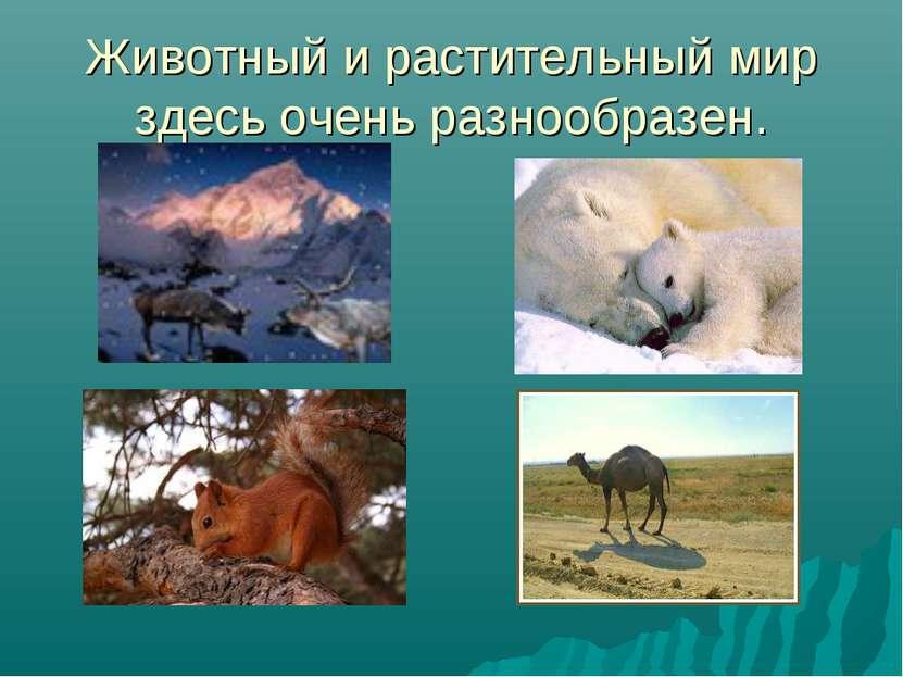 Животный и растительный мир здесь очень разнообразен.