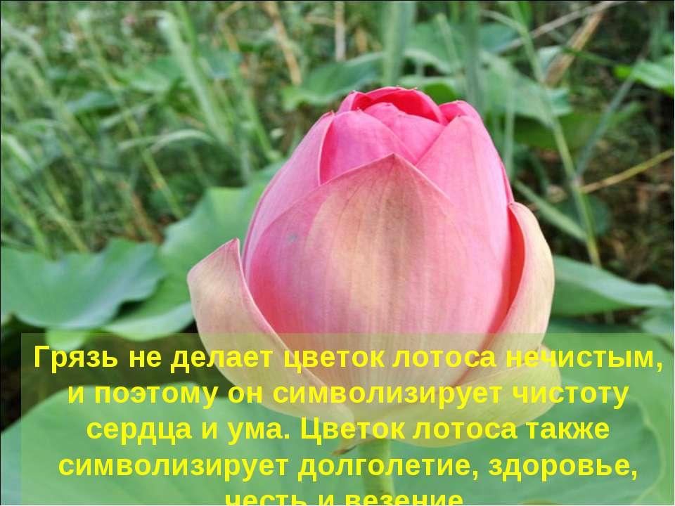 Грязь не делает цветок лотоса нечистым, и поэтому он символизирует чистоту се...