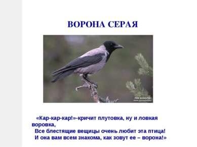 ВОРОНА СЕРАЯ «Кар-кар-кар!»-кричит плутовка, ну и ловкая воровка, Все блестящ...