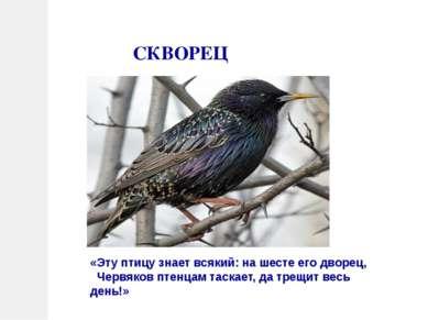 СКВОРЕЦ «Эту птицу знает всякий: на шесте его дворец, Червяков птенцам таскае...