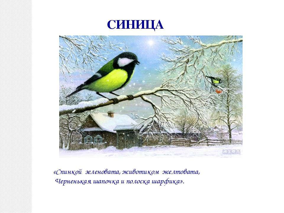 СИНИЦА «Спинкой зеленовата, животиком желтовата, Черненькая шапочка и полоска...