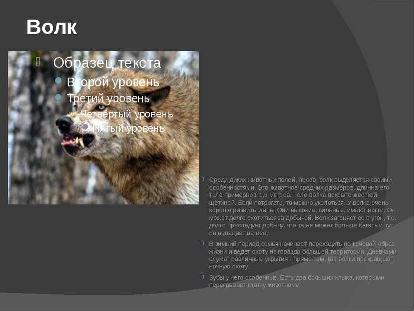 Волк Среди диких животных полей, лесов, волк выделяется своими особенностями....
