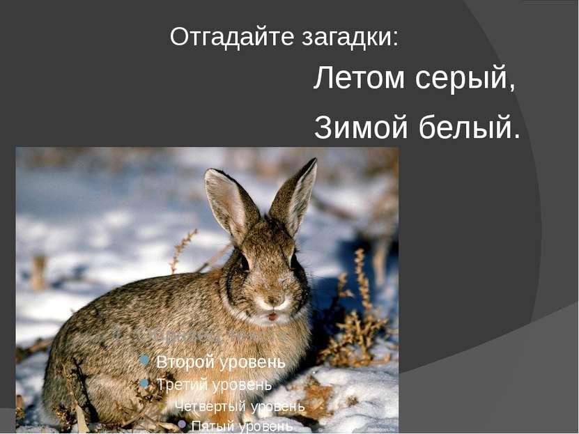 Отгадайте загадки: Летом серый, Зимой белый.