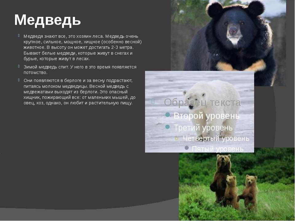 Медведь Медведя знают все, это хозяин леса. Медведь очень крупное, сильное, м...
