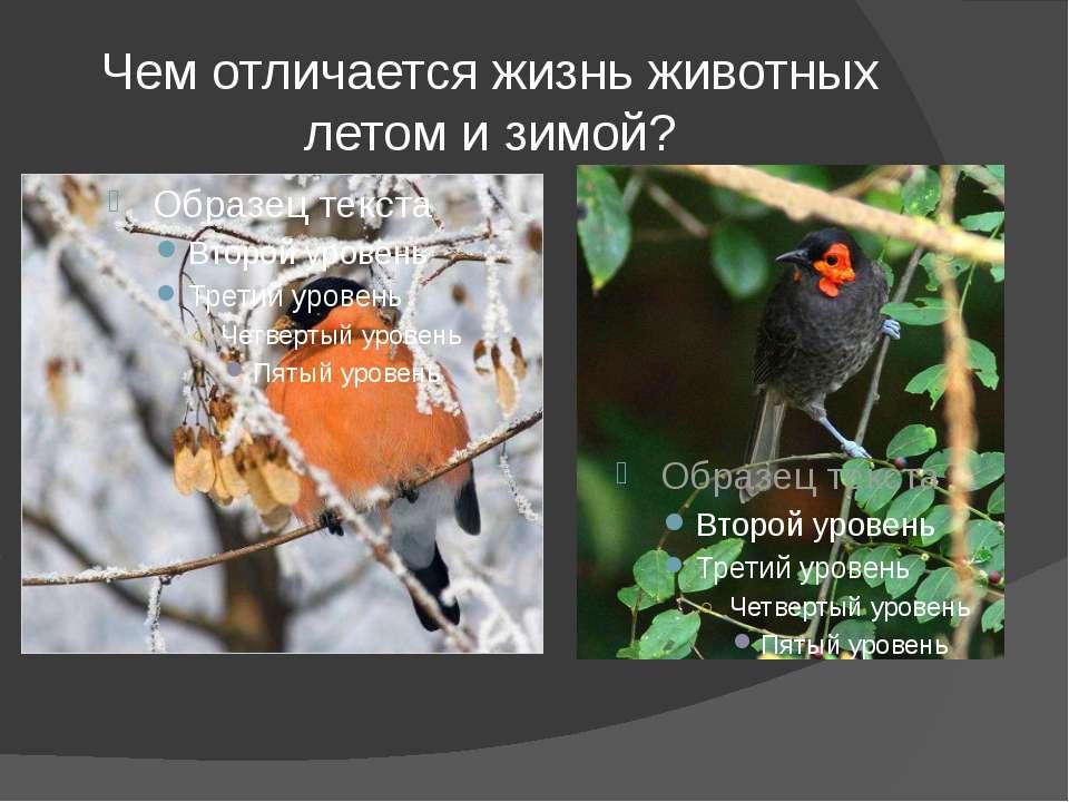 Чем отличается жизнь животных летом и зимой?