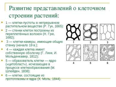 Развитие представлений о клеточном строении растений: 1 — клетки-пустоты в не...