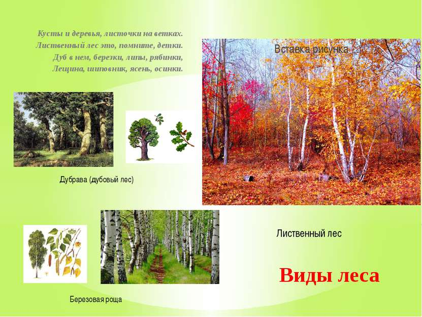 Кусты и деревья, листочки на ветках. Лиственный лес это, помните, детки. Дуб ...